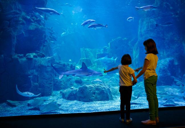 Akvarium med en masse spændende fisk