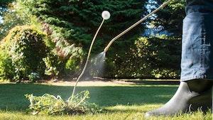 Drop pesticiderne i haven