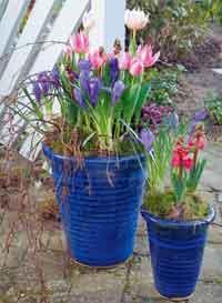 Gjødsel og vann gjør at blomstene holder seg frodige og friske