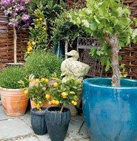 Dyrker du druer, appelsiner eller oliven i krukker kan du lage et eksotisk miljø i hagen.