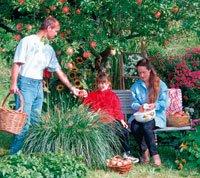 Gjørinnhøstingen av epler til en familiefest for store og små!