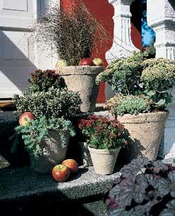 Bruk vintergrønne planter som pynt foran inngangsdøren før jul.