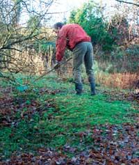 La gjerne løvet under buskene bli liggende. Det råtner etterhvert og blir verdifull næring.