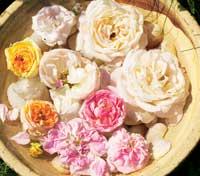 La rosene svømme i et fat fylt med vann.