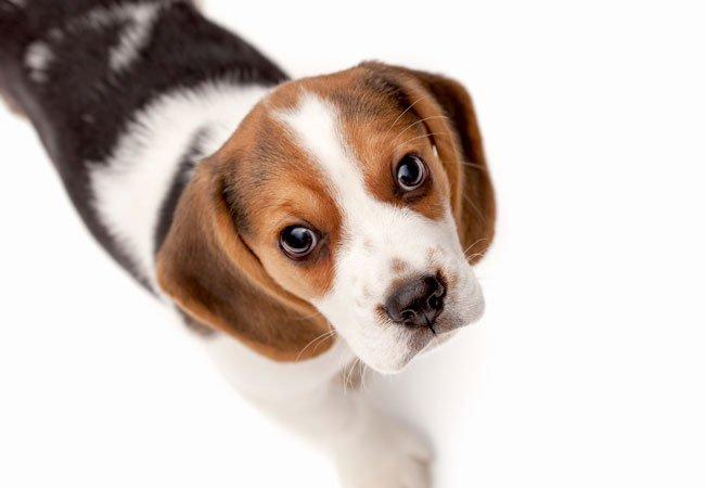 hunden kikker deg dypt i øynene