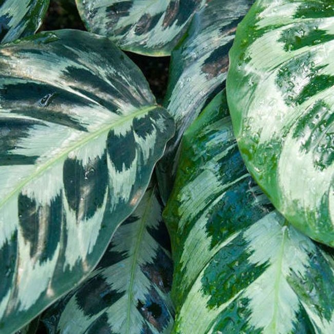 10 fine planter, du aldrig kan slå ihjel