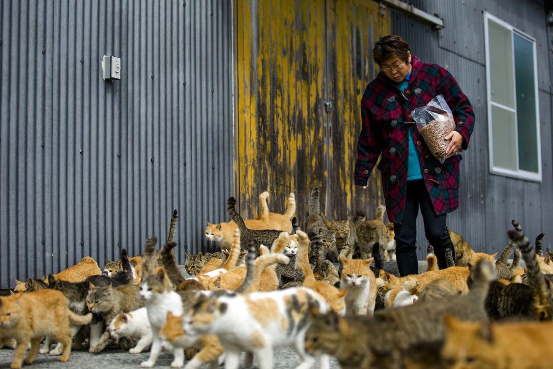 Se Katteøen, som alle taler om på nettet