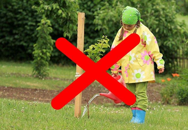 Piger vander æbletræ, hvor jorden ikke er blevet luget væk.