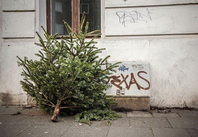 Afhentning af juletræ.