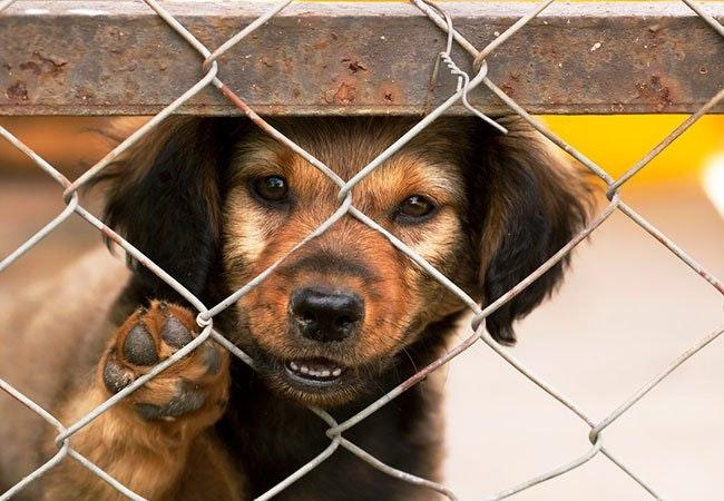 5 tips til hvordan du reducerer omkostningerne ved at holde kæledyr