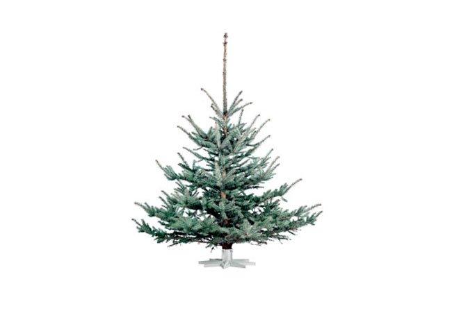 Blågran, type af juletræ.
