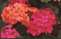 Foto: Lisas blommor