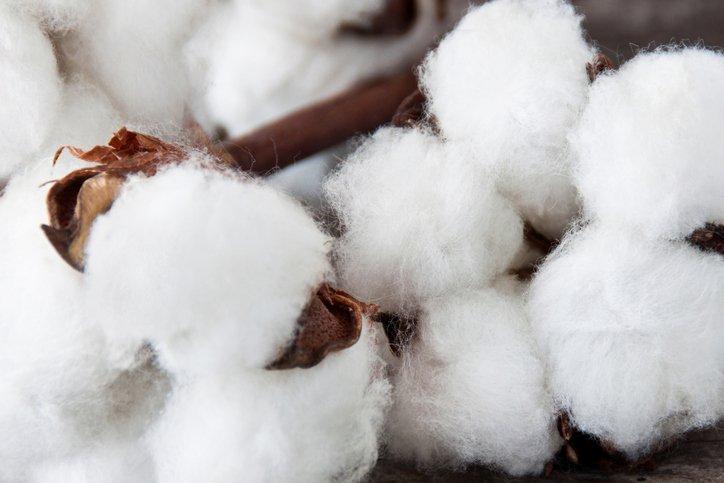 Bomuld - Anden mest brugte materiale i tøjindustrien