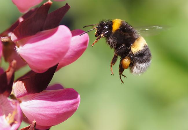 brumbasser og bier i haven