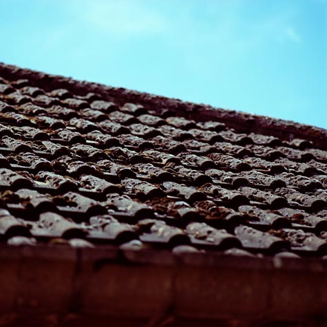 mose på taket