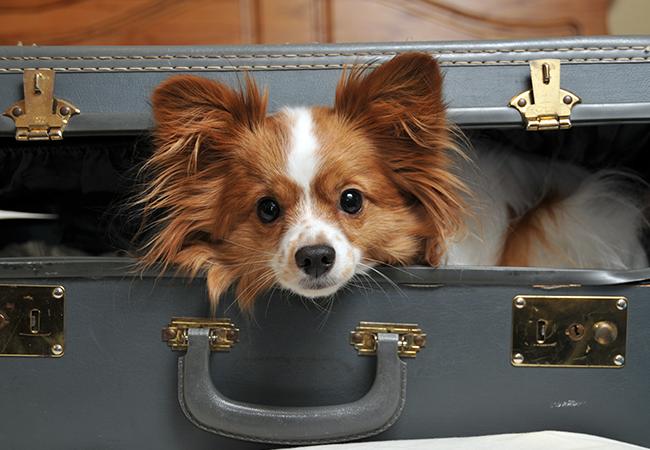 Hunde- og kattepension: Hvad skal jeg overveje?