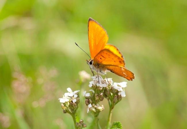 Insekterne forsvinder: Sådan hjælper du insekterne i din have