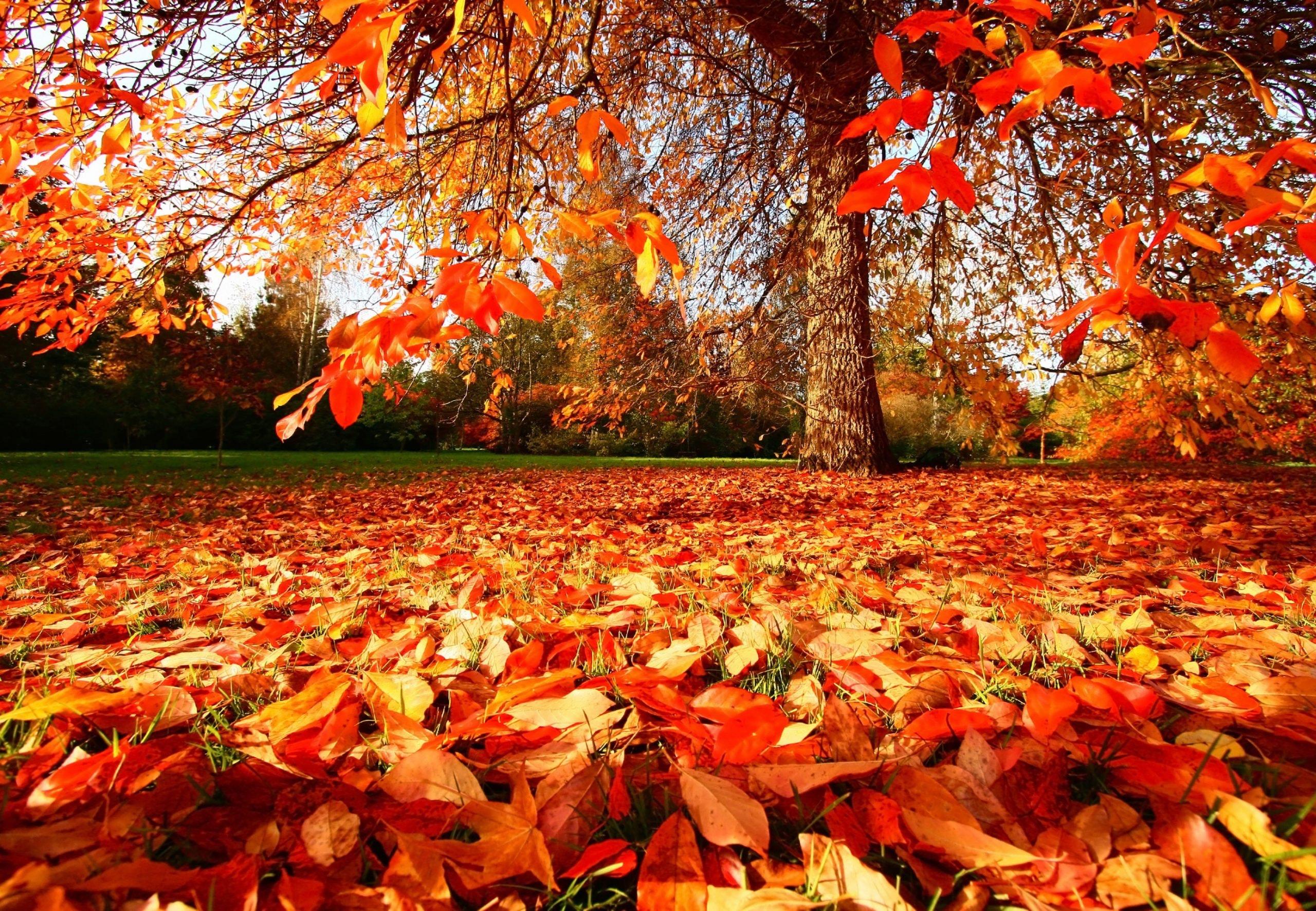 9 ting du skal huske i haven om efteråret