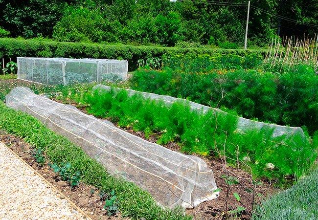 Plantetunnel - supplement og alternativ til fiberdug