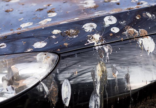 fuglelort og fugleklatter på bilen