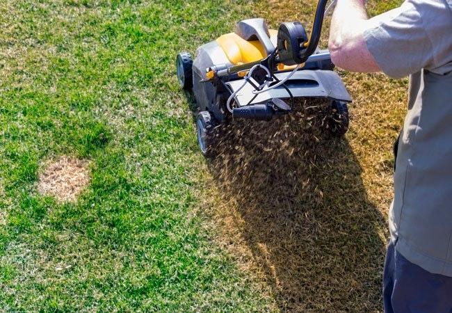 Græsslåning på den rigtige måde og de rette tidspunkter