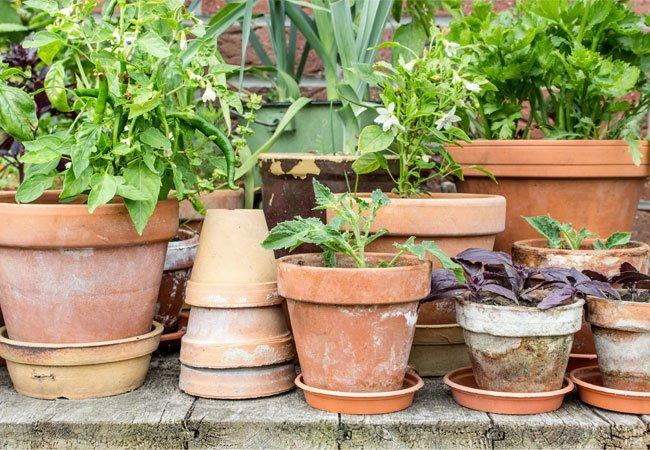 gode potter og krukker til planter og blomster