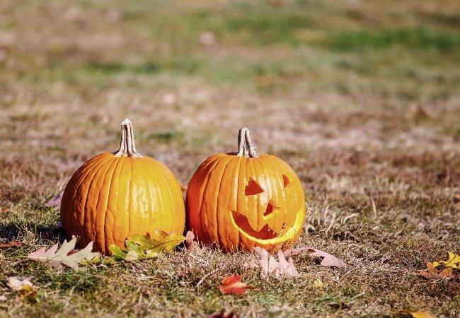 Halloween-græskar lyser op på plænen og skaber hyggelig uhygge.