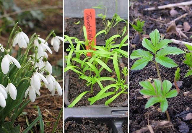 Haven i marts – det skal du gøre