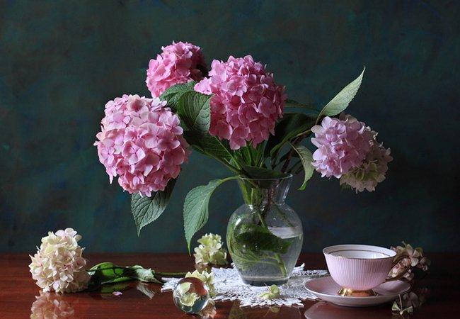 rosa hortensia i vase - stell