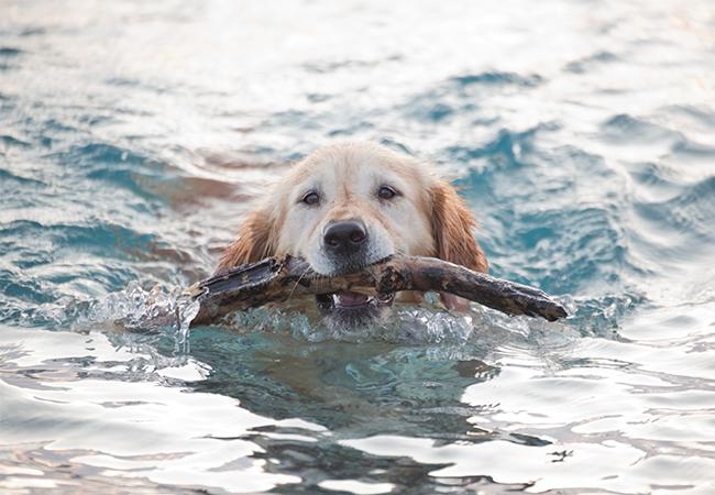 hund der bader i vand og leger