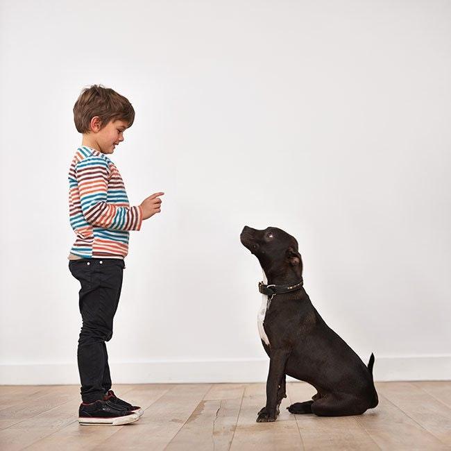 10 enkle måder at holde din hund beskæftiget indendørs