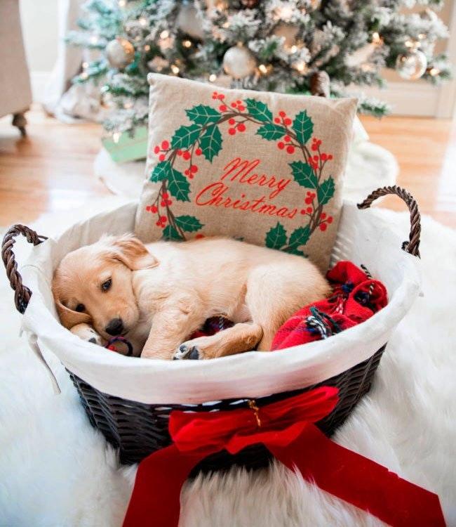 Julekurv til hunden.