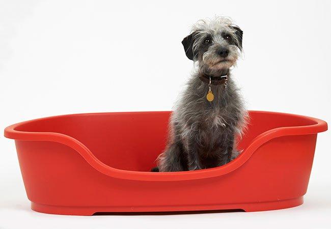 Hund i rød hundekurv.
