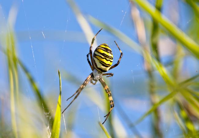 Derfor vrimler det med mystiske edderkopper