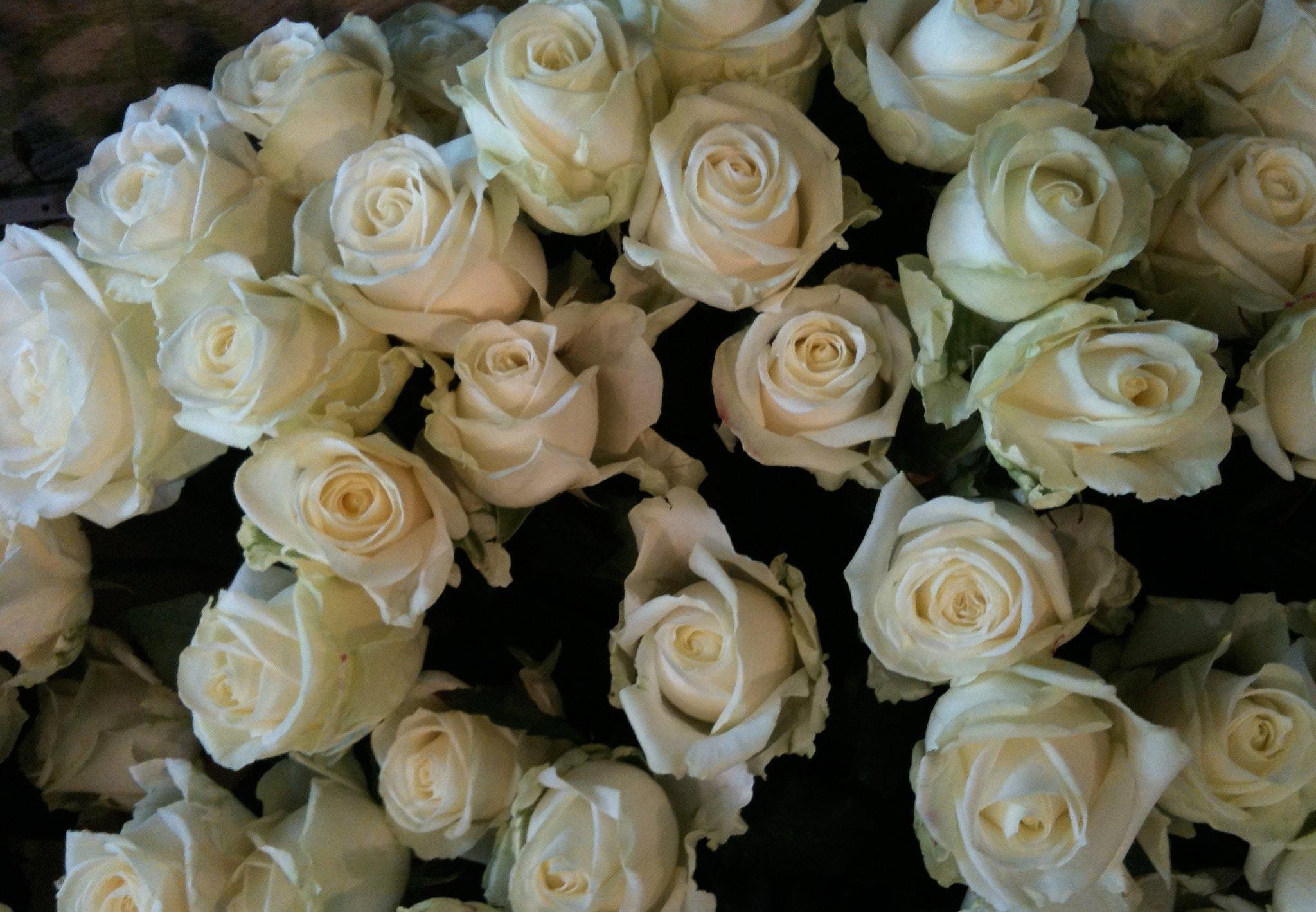 Dette betyder rosernes farver