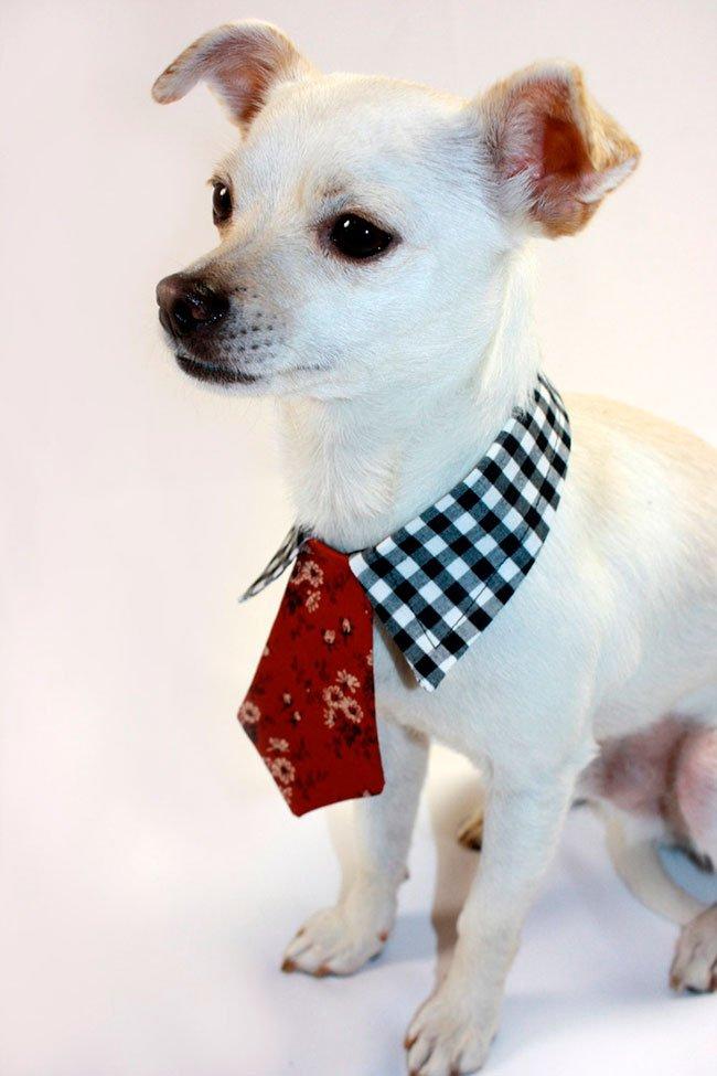 En hund med slips.