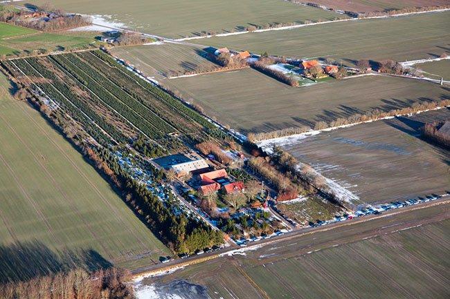 Juletræsplantage ved Herning