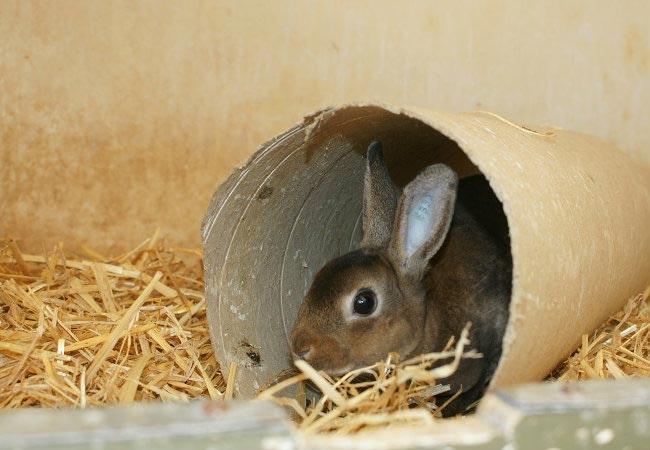 Sådan gør du din kanin ekstra glad