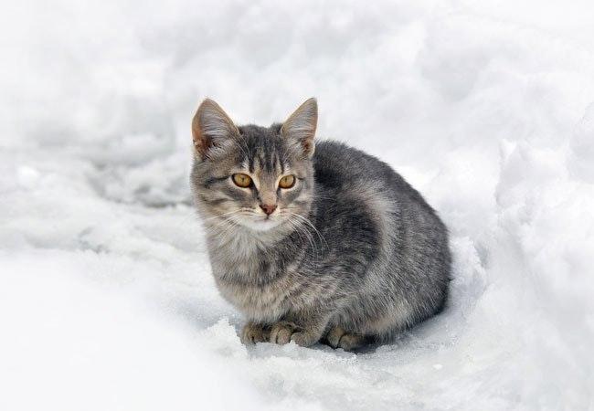 Advarsel: Sørg for at holde din kat indendørs de næste nætter
