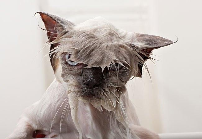 Må du skræmme naboens katte væk med vand?
