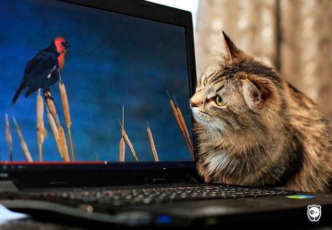 Katte før og nu: sådan har teknologien ændret kattes liv