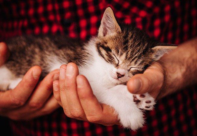 Kattes hemmelighed - hvor meget sover de?