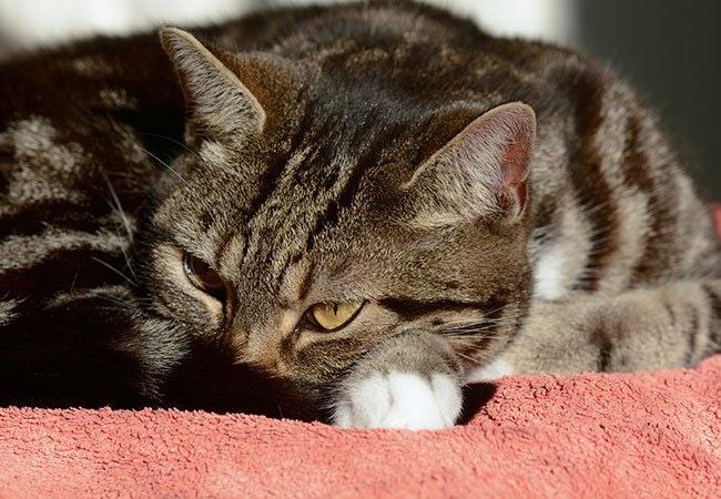 15 problemer, som kun katteejere forstår