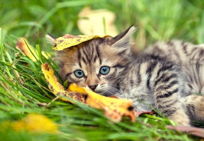 Sommervarmen kan være dødelig for din kat