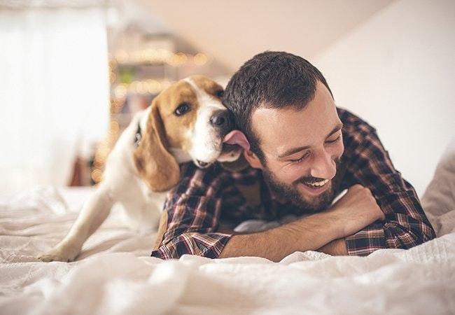 Sådan aflæser du din hunds opførsel