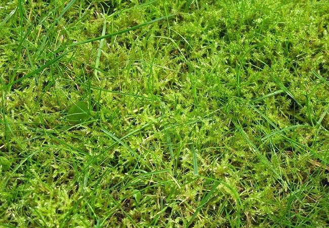 Hvilken græsplæne-type er du?