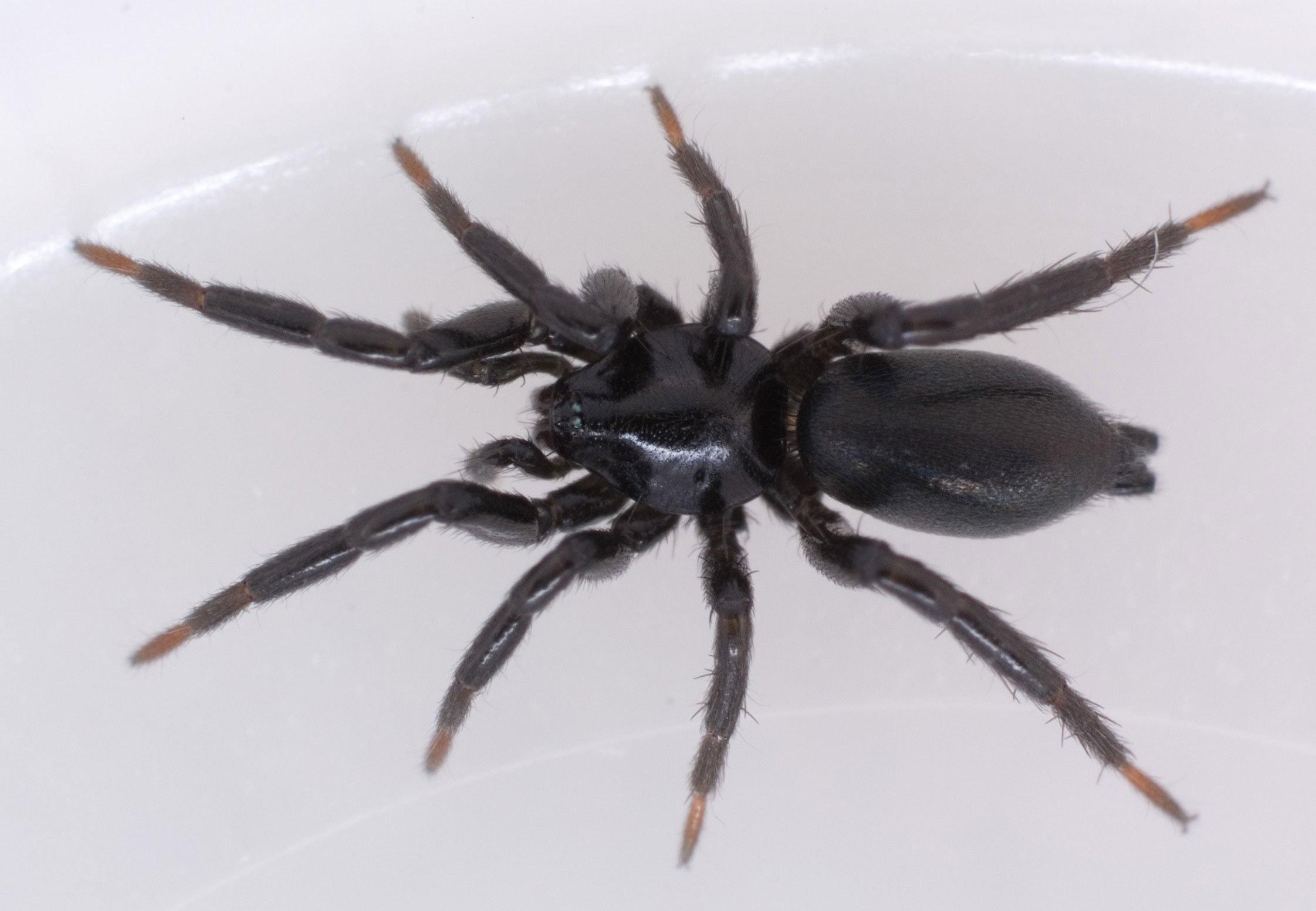 Mød de 7 edderkopper, der bor i dit hus