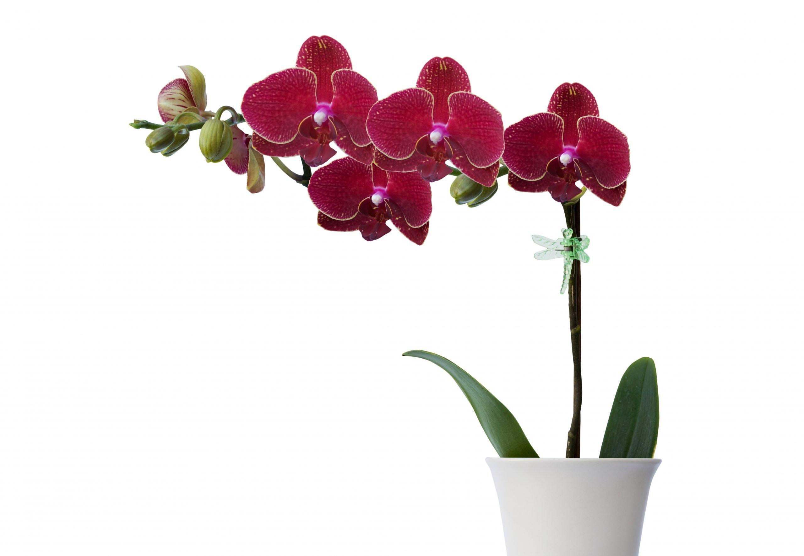 7 planter, der gør dit humør bedre om vinteren