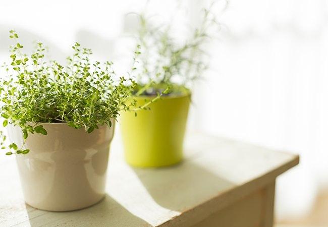 6 gode råd til pleje af indendørs planter