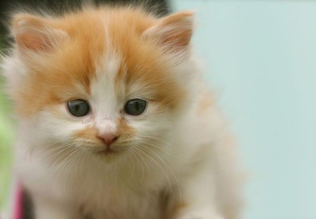 10 ting du skal vide om nyfødte kattekillinger